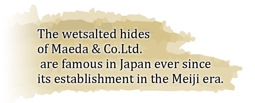 The wetsalted hides of Maeda & Co.Ltd. are famous in Japan ever since its establishment in the Meiji era.